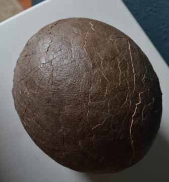 My hadrosaur egg